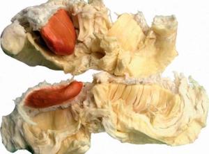 durian bhineka