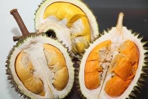durian tembagaa